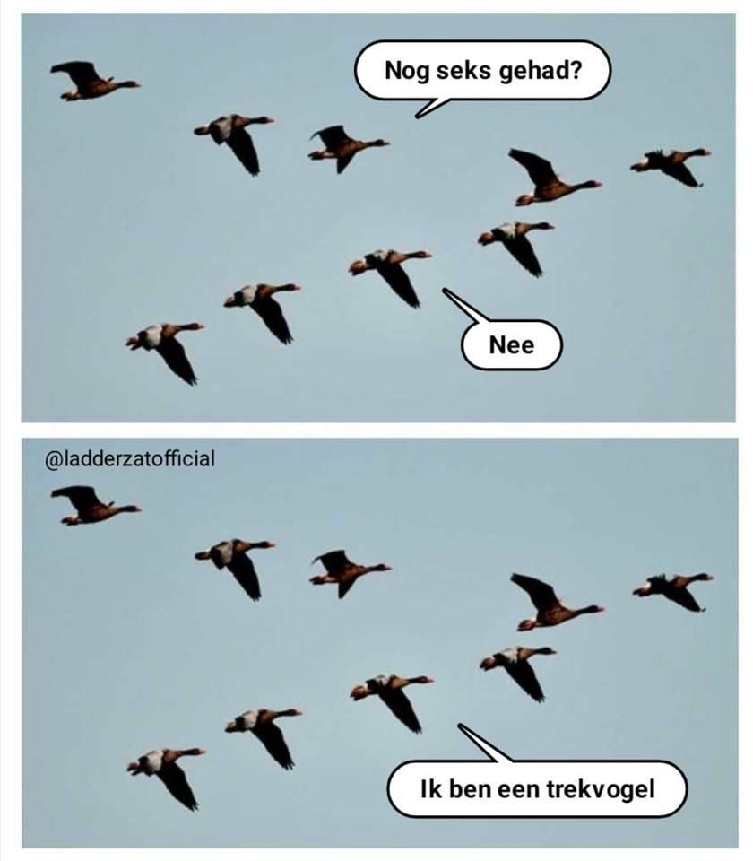 trekvogel.jpg